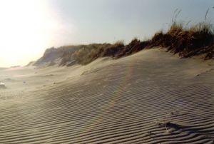 13073_fire_island_beach.jpg