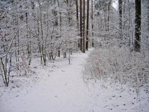 1380348_winter_idyll.jpg
