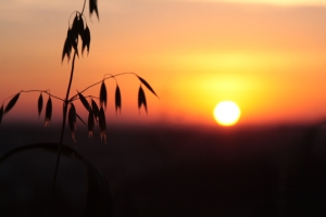 1412838_sundown.jpg