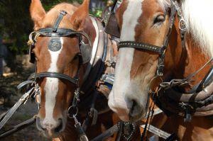 639296_horses.jpg
