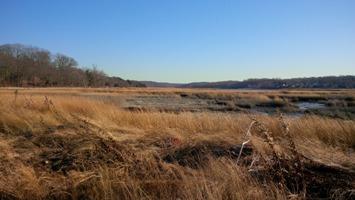 Marsh.12.28.13.jpg
