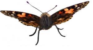 butterfly-1427284-m.jpg