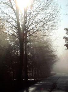 misty-morning-2-786135-m.jpg