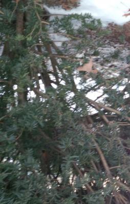 snow.IMG_00000242 (3) - Copy.jpg
